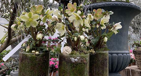 Compositions florales des pépinières Bellet de Ladoucette