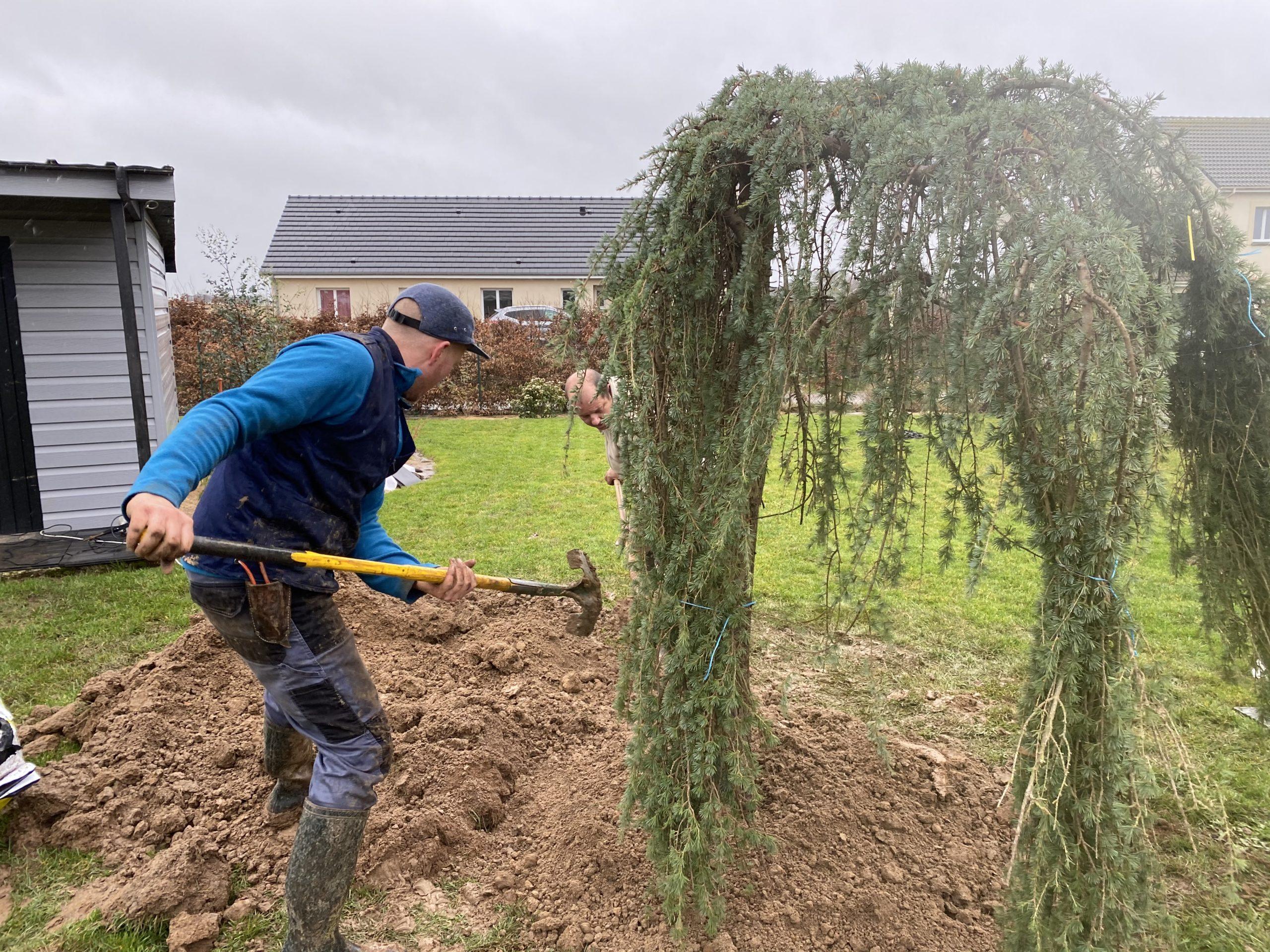 Plantation d'arbre - service