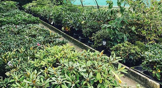 Arbustes et plantes perpétuelles