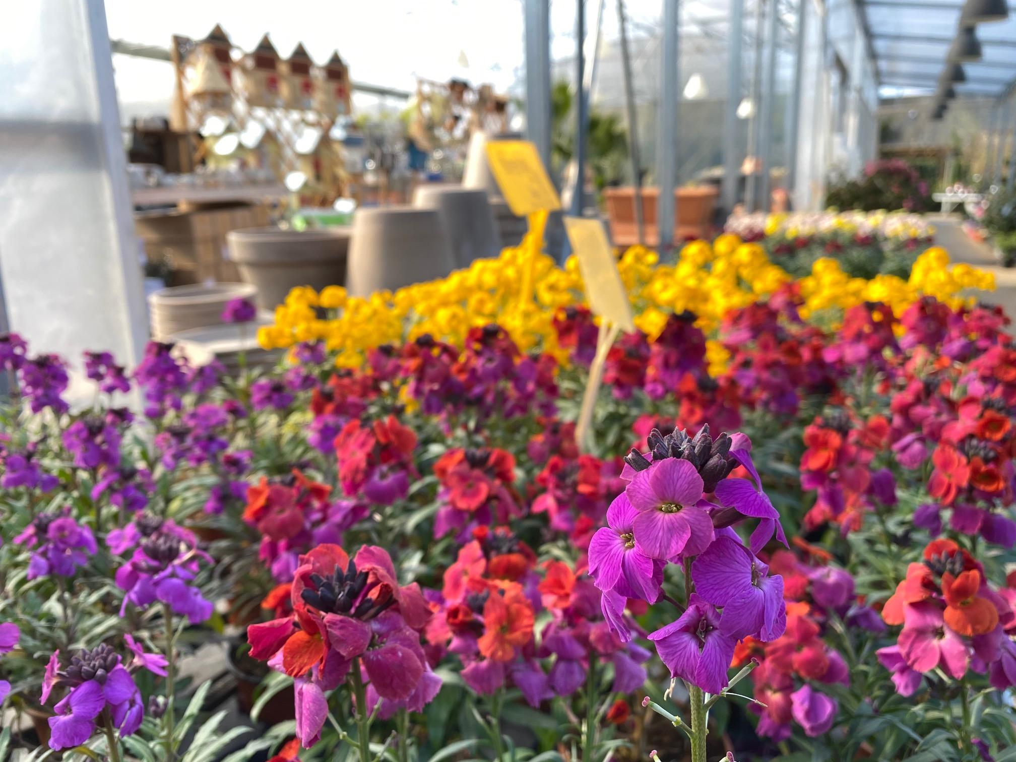 fleurs des pépinières Bellet de Ladoucette